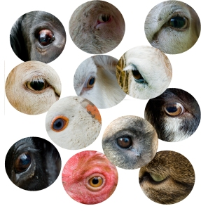 todo ojos